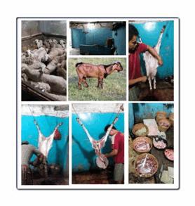 Daging kambing halal di Dagon Township