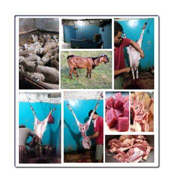 Daging kambing halal di Keil